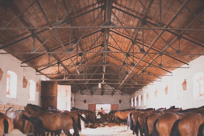 Alentejo Horses-1