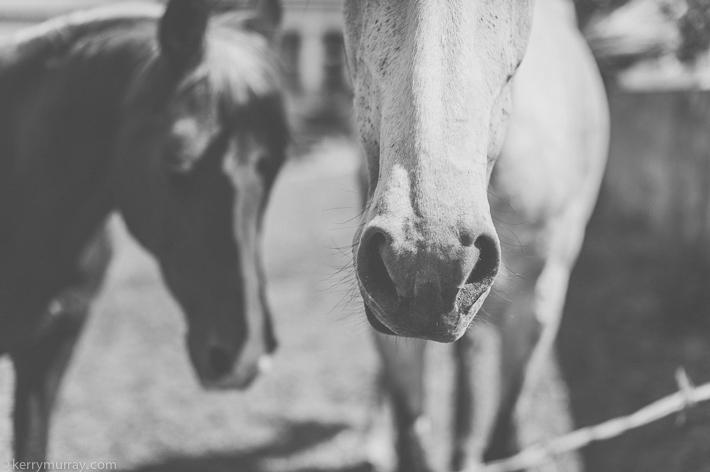 Alentejo Horses-3