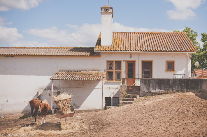 Alentejo Horses-6