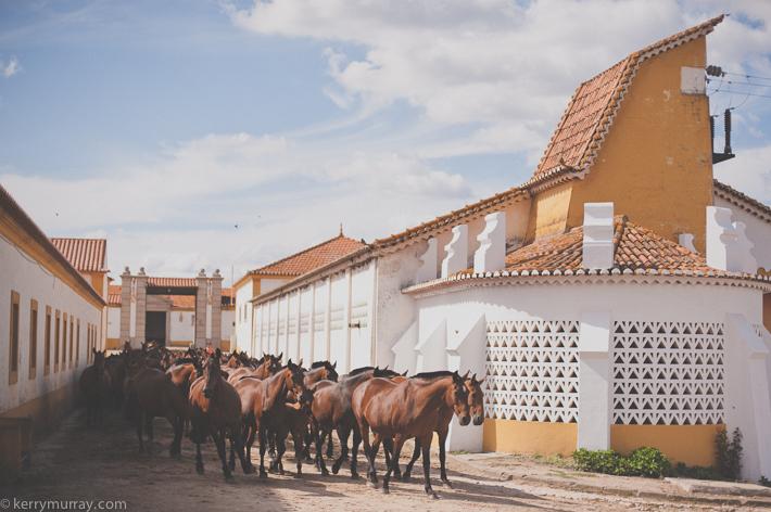 Alentejo Horses-7