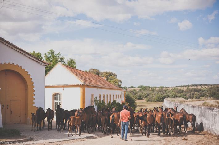 Alentejo Horses-8