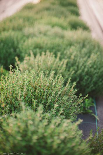 organic herb farm alentejo