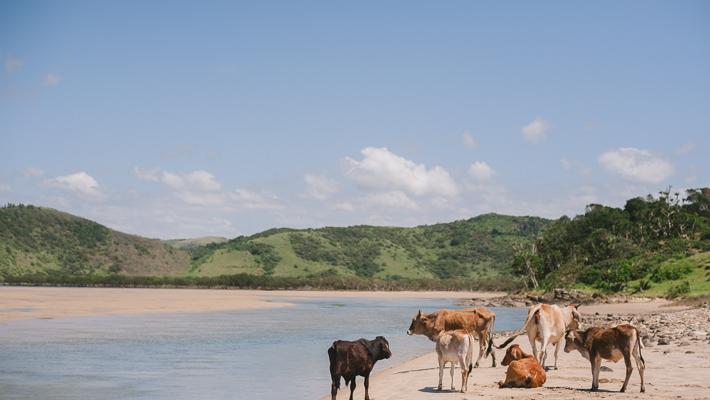 Mdumbi Beach Transkei